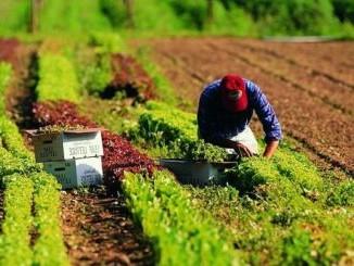 Come ottenere un prestito agricolo