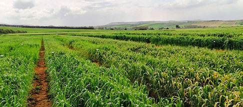 Strumenti di finanziamento agricolo e prestiti agevolati agricoltura