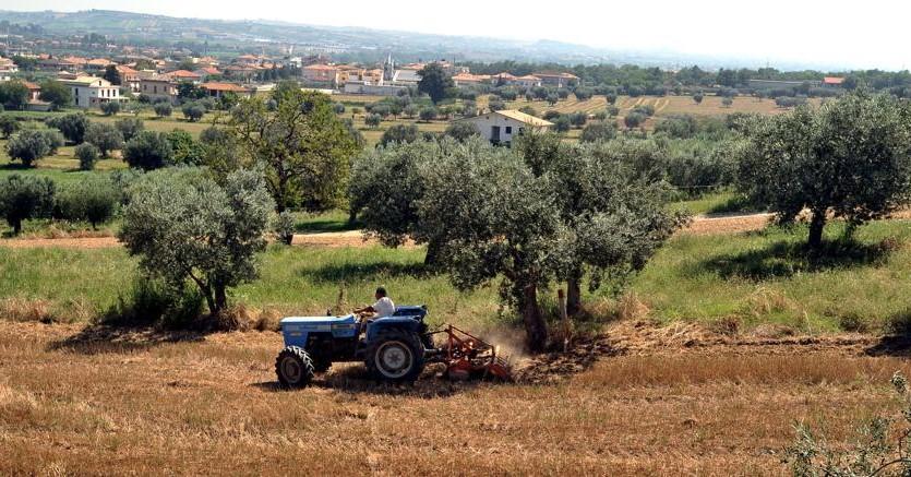 Finanziamenti per acquisto terreni agricoli